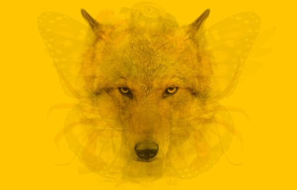 test personalita animali5